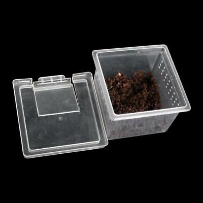 Transparent Plastic Box Insect Reptile Transport Breeding Feeding Basin