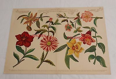 ANTIQUE 1882 NEEDLEWORK CREWEL EMBROIDERY 6 FLORAL DESIGNS for Chair Seats
