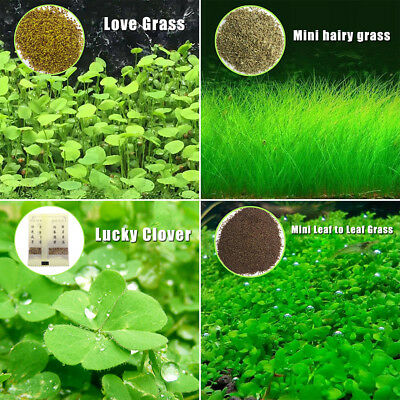 Plant Seeds Fish Tank Aquarium Aquatic Water Grass Decor Garden Foreground Plant