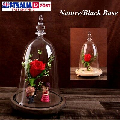Glass Display Dome Cloche Bell Jar Flower Preservation w/ Wooden Base Home Decor