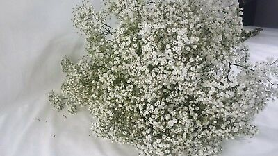 Babies breath/gypsophilia, Million Star dried bunch, DIY wedding, DIY Filler