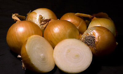 ONION 'Gladalan Brown' 150 HEIRLOOM seeds VEGETABLE GARDEN EASY TO GROW