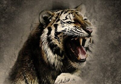 Abstract Tiger wild animal Quality home decor Canvas Painting Wall Art Prints