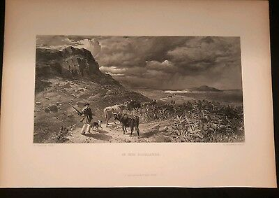 Herding Cattle in the Highlands antique Engraving circa 1875  Cow long horned