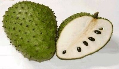 Soursop – Annona Muricata – Awesome Tropical Fruit Tree