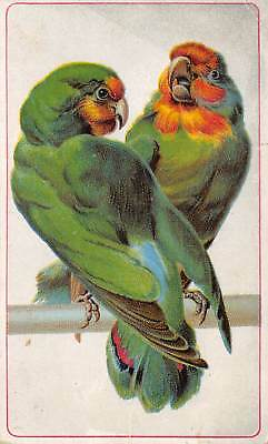 Ariosa Coffee Victorian Advertising Trade Card Parrots