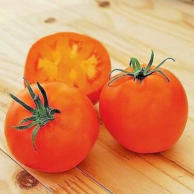 Amish Orange heirloom tomato non-gmo O.P. HIGHEST LYCOPENE CONTENT! LOOK!