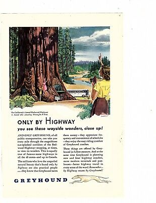 Greyhound Bus California's Redwood Highway House in a tree 1947 OZ387