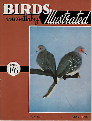 Birds Illustrated Monthly Magazine 1958 May Border Canary Jays Gannets 2645F