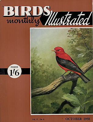 Birds Illustrated Monthly Magazine 1958 October Owls That Fly By Day  2650F
