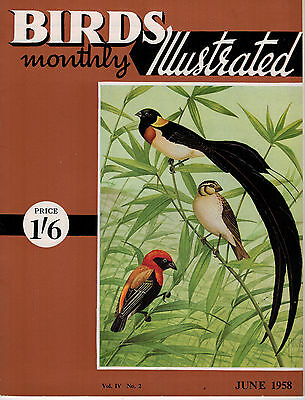 Birds Illustrated Monthly Magazine 1958 June Chough Red Billed Weavers 2646F