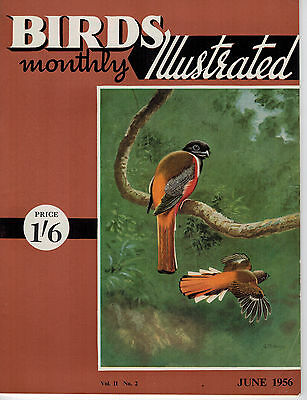 Birds Illustrated Monthly Magazine 1956 June Nest Boxes Lizard Canary 2622F