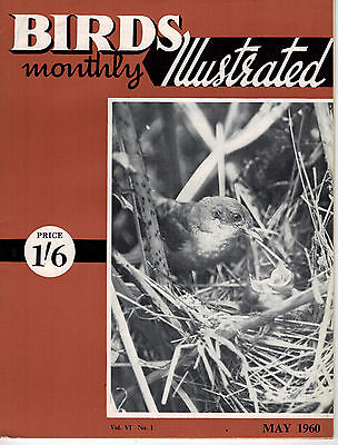 Birds Illustrated Monthly Magazine 1960 May Falconers Talk 2667F