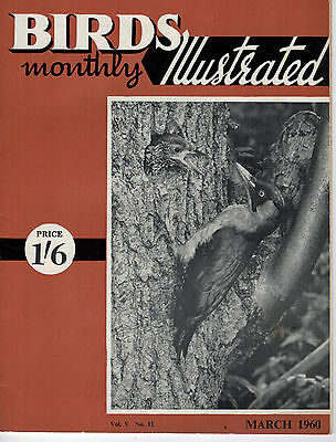 Birds Illustrated Monthly Magazine 1960 March Border Canary 2665F