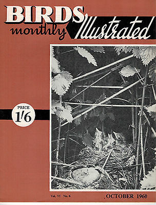 Birds Illustrated Monthly Magazine 1960 October Canaries Choosing A Breed 2672F