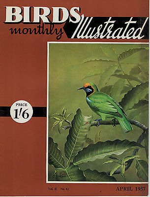 Birds Illustrated Monthly Magazine 1957 April Oyster Catcher Blackcap 2632F