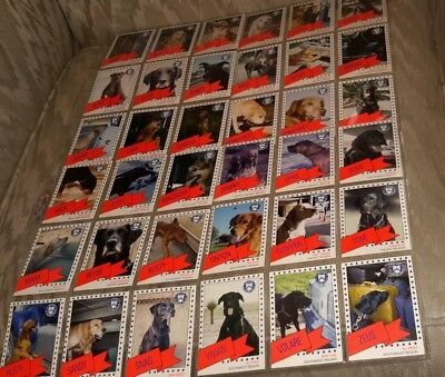 Collection of 28 Service Dogs Cards by U.S. Treasury Customs Service