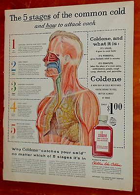 1956 Coldene Cold Medicine Ad With Inside Human Body Illustration - Vintage 50S