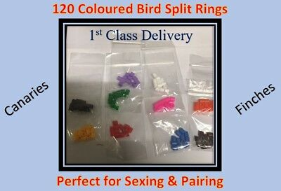 Bird Supplies Other Bird Supplies 2 X Leg Rings 12 X 4mm Budgies Sm Parakeet Breeding Nesting Rings Baby Hatchling Customers First