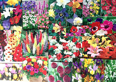 Garden Flowers Bulbs Spring Summer Perennial,easy To Grow Quality Pack,labels