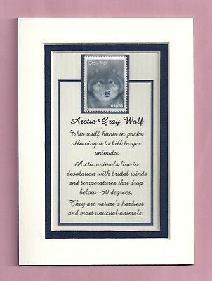 3292 -Arctic Gray Wolf Stamp-Ready-to-be-framed Gift - LOWEST PRICES