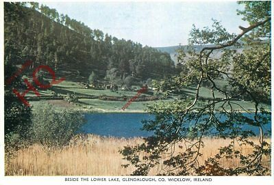 Picture Postcard:;Co. Wicklow, Beside The Lower Lake, Glendalough