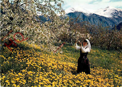 Picture Postcard~ Norway, Fruit Blossom Time