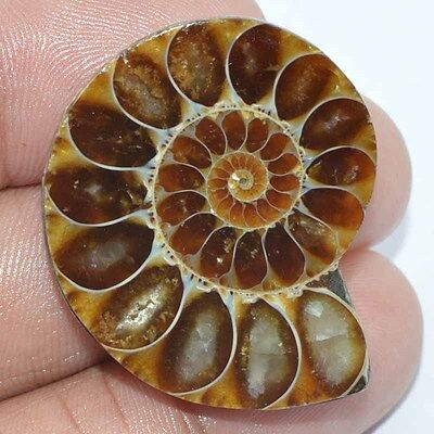 45.60 Cts. 100% NATURAL DESIGNER AMMONITE FANCY SHAPE CABOCHON LOOSE GEMSTONE