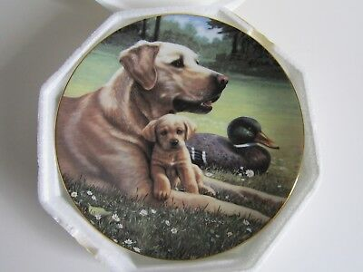 """Collector Plate From Hamilton Collection:  """"like Father, Like Son""""-Yellow Labs"""