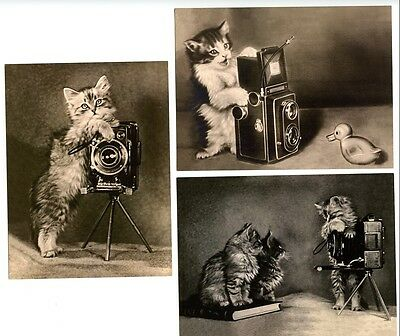 4 modern cat postcards adorable cats kitten photographers box brownie camera