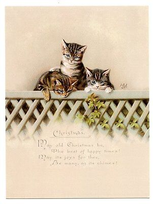 modern cat postcard Maguire Christmas trio of tabby cats peep over fence w ivy