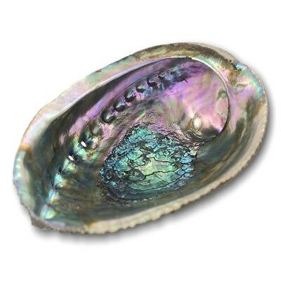 1pc Rainbow Abalone Natural Seashell for Smudging Ritual Home Cleansing
