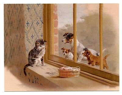 modern cat postcard Maguire cat in window dogs outside look in CAT CHARITY