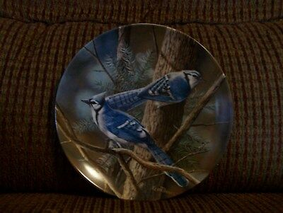 Blue Jay Collector Plate
