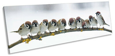 Sparrows Branch Birds Picture PANORAMA CANVAS WALL ART Print