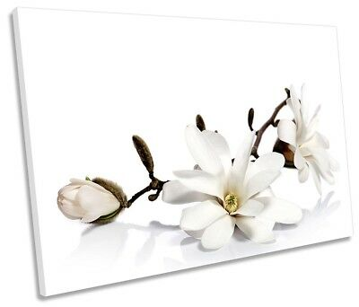 White Magnolia Flowers Floral Picture SINGLE CANVAS WALL ART Print