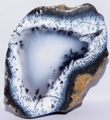 227cts. Natural Royal Dendrite Opal Agate Plate Rough Loose Gemstone 4178