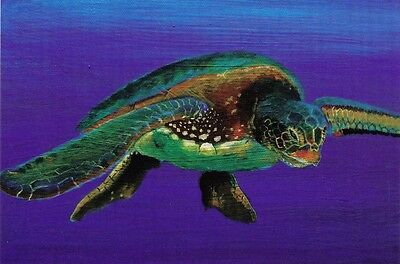 AVANT CARD AUSTRALIAN ART POSTCARD Turtle by Jhana Bowen