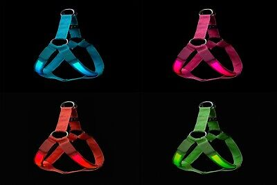 Light Up LED Dog Harness Safety in Blue or Pink Colours Small Medium Large Sizes