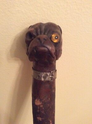 Antique Bull or pit Dog head w/silver collar handled wood walking cane,35""