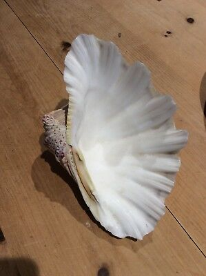 Vintage Clam shell large