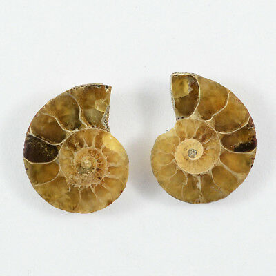 16.35  Cts. 100% NATURAL DESIGNER AMMONITE 1 PAIR FOSSIL GEMSTONES FOR EARRINGS
