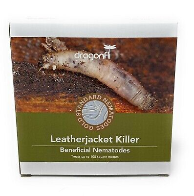 Dragonfli Leatherjacket Killer Nematodes (100sqm) Kill Leatherjacket Lawn Grubs