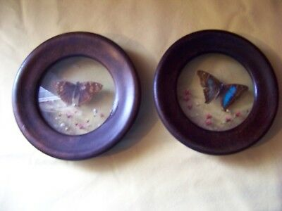 set of 2 Antique/vintage Real butterfly & dried Flowers Framed Made in Brazil