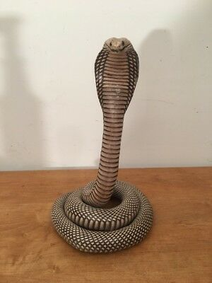Real snake taxidermy, Cobra Genuine