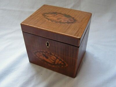 Antique English Mahogany & Harewood Tea Caddy With Marquetry Conch Shell Inlay