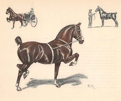 The Hackney Harness Horse Color  Print  Edwin Megargee Vintage Book Plate