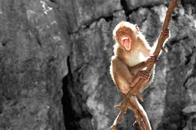 DIGITAL PHOTO PICTURE IMAGE WALLPAPER SCREENSAVER DESKTOP - Monkey #14
