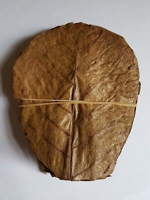 "50 grade A Indian almond leaves 10-15cm 4-6"" for shrimps betta tropical fish"