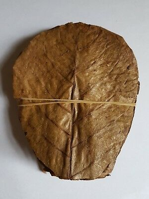 "100 grade A Indian almond leaves 10-15cm 4-6"" for shrimps betta tropical fish"